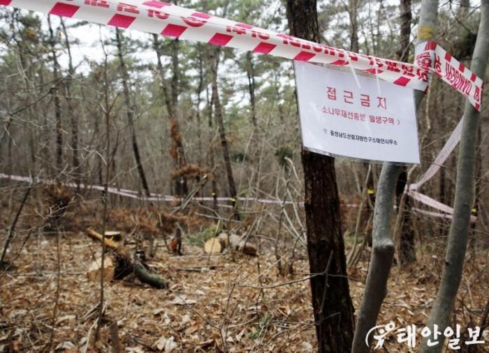 소나무 재선충병(2).JPG