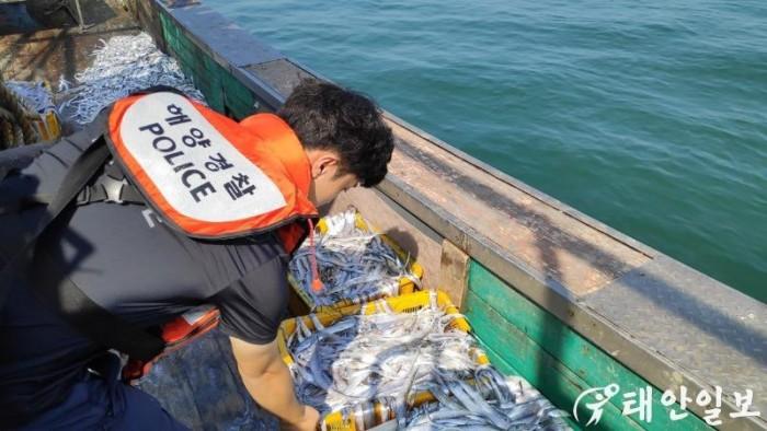 ▲ 태안해경 형사기동정 경찰관이 체장미달 갈치를 확인하고 있다..jpg
