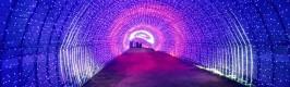 '신종 코로나' 여파, 안면도 빛축제 임시휴업