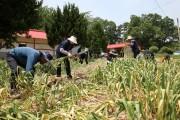 계절별 수요에 따른 '맞춤형 농촌인력 수급' 추진