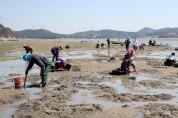 '통통(通通)한 어촌마을 만들기'...바지락 캐기 행사
