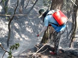 '대형 산불예방' 적극 대응 나선다...산불위험 단계별 비상근무 실시