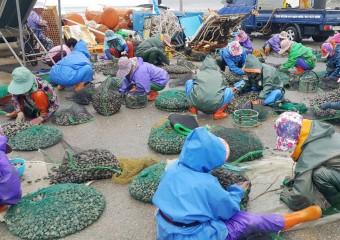 고남면 만수동어촌계, 전국 최대 마을연금 제도 운영